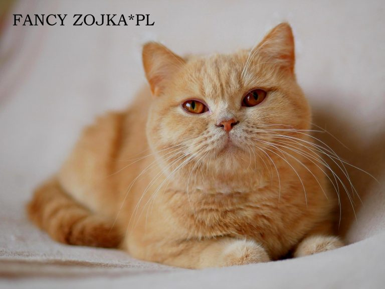 Fancy Zojka*PL